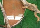 tartapedia-turtle-point-napoli-2011-043