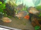 tartapedia-turtle-point-napoli-2011-044