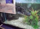 tartapedia-turtle-point-napoli-2011-045