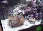 tartapedia-turtle-point-napoli-2011-046