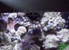 tartapedia-turtle-point-napoli-2011-049