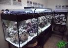 tartapedia-turtle-point-napoli-2011-051