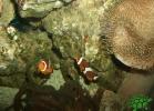 tartapedia-turtle-point-napoli-2011-052