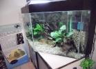 tartapedia-turtle-point-napoli-2011-053