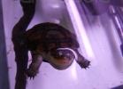 tartapedia-turtle-point-napoli-2011-054