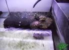 tartapedia-turtle-point-napoli-2011-055
