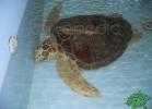 tartapedia-turtle-point-napoli-2011-059