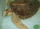 tartapedia-turtle-point-napoli-2011-060