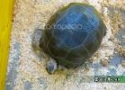 tartarughe-beach-2014-016