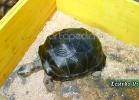 tartarughe-beach-2014-017