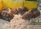 tartarughe-beach-2014-018
