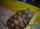 tartarughe-beach-2014-021