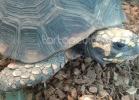 tartarughe-beach-2014-024
