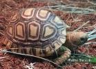 tartarughe-beach-2014-028