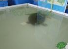 turtle-point-napoli-maggio-2013-tartapedia-001