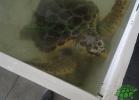 turtle-point-napoli-maggio-2013-tartapedia-009