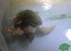 turtle-point-napoli-maggio-2013-tartapedia-017