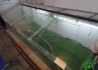 turtle-point-napoli-maggio-2013-tartapedia-020