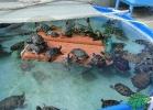 turtle-point-napoli-maggio-2013-tartapedia-036