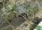 turtle-point-napoli-maggio-2013-tartapedia-043