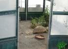 turtle-point-napoli-maggio-2013-tartapedia-046