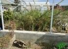 turtle-point-napoli-maggio-2013-tartapedia-048
