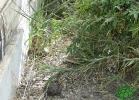 turtle-point-napoli-maggio-2013-tartapedia-049