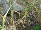 turtle-point-napoli-maggio-2013-tartapedia-050
