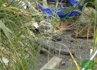 turtle-point-napoli-maggio-2013-tartapedia-051