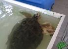 Turtle Point Napoli - Maggio 2013