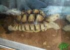 verona-reptiles-2012-domca-esotik-04