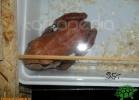 verona-reptiles-2012-domca-esotik-05