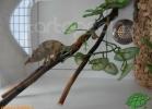 verona-reptiles-2012-domca-esotik-06