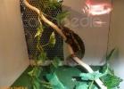verona-reptiles-2012-domca-esotik-07