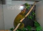 verona-reptiles-2012-domca-esotik-09