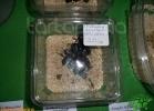 verona-reptiles-2012-domca-esotik-10