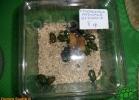 verona-reptiles-2012-domca-esotik-11