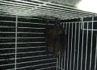 verona-reptiles-2012-domca-esotik-14