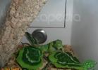 verona-reptiles-2012-domca-esotik-18