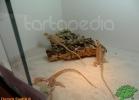 verona-reptiles-2012-domca-esotik-19