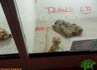 verona-reptiles-2012-domca-esotik-20