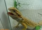 verona-reptiles-2012-domca-esotik-21
