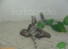 verona-reptiles-2012-domca-esotik-22