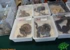 verona-reptiles-2012-domca-esotik-24