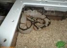 verona-reptiles-2012-domca-esotik-25