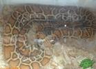 verona-reptiles-2012-domca-esotik-26