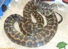verona-reptiles-2012-domca-esotik-31