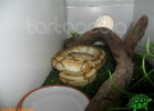 verona-reptiles-2012-domca-esotik-34