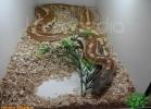 verona-reptiles-2012-domca-esotik-37