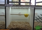 verona-reptiles-2012-domca-esotik-38